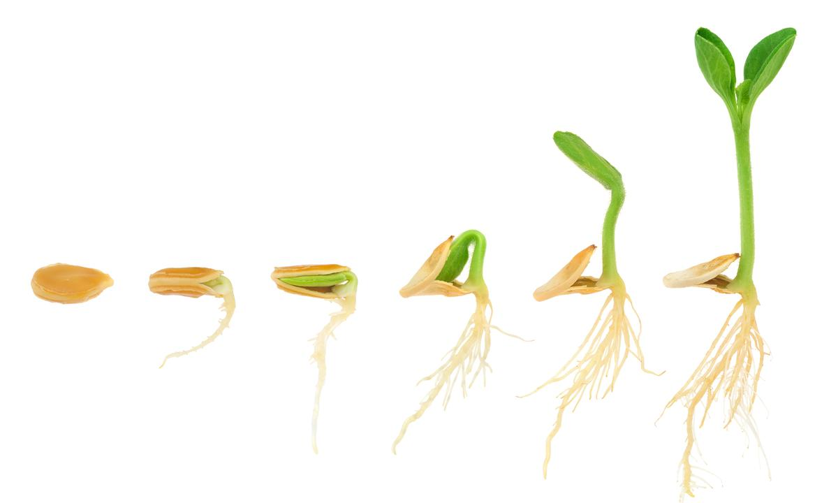 Sequence of pumpkin plant growing isolated on white, evolution concept, cut out