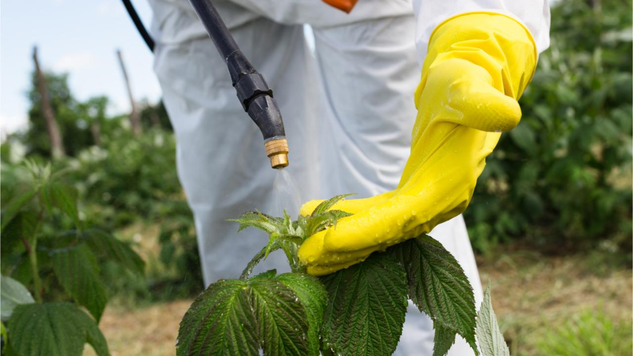 Agriculture worker - Young worker spraying organic pesticides on fruit growing plantation