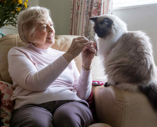 Image library picture of older woman sitting in her armchair with persian cat on the armrest.