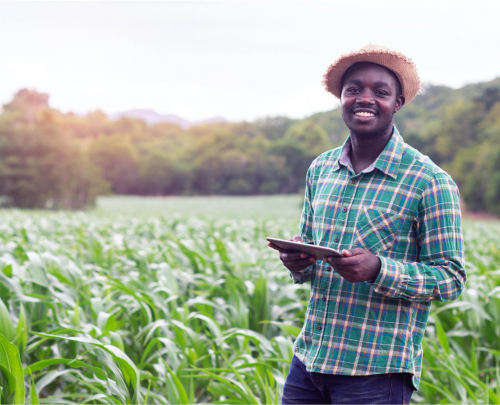 A smiling African farmer in check-shirt and straw hat, standing in a field of crops with tablet computer in his hands